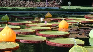 lisa-dorner-botanical-gardens2